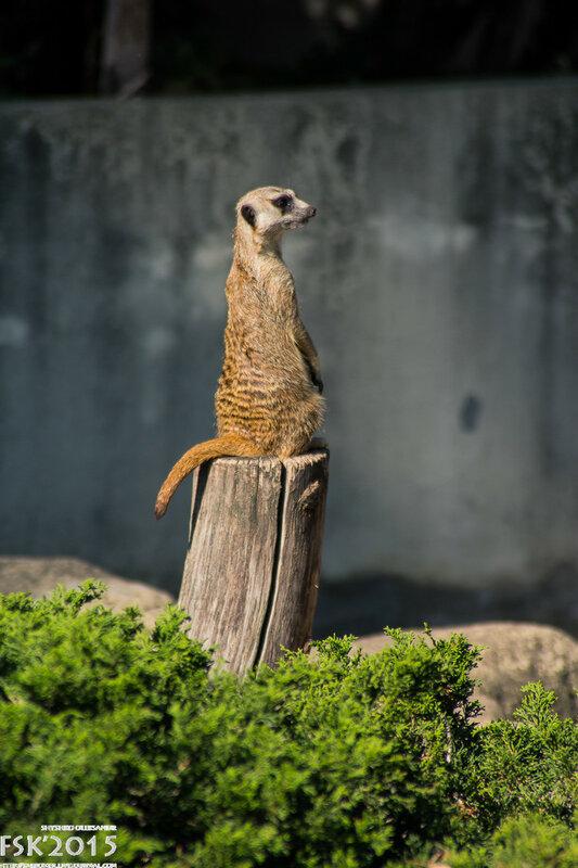 warshaw_zoo-46.jpg