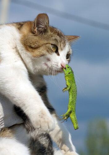 Я предупреждал тебя не называть меня земляным червякооооом!!!!!!!!!