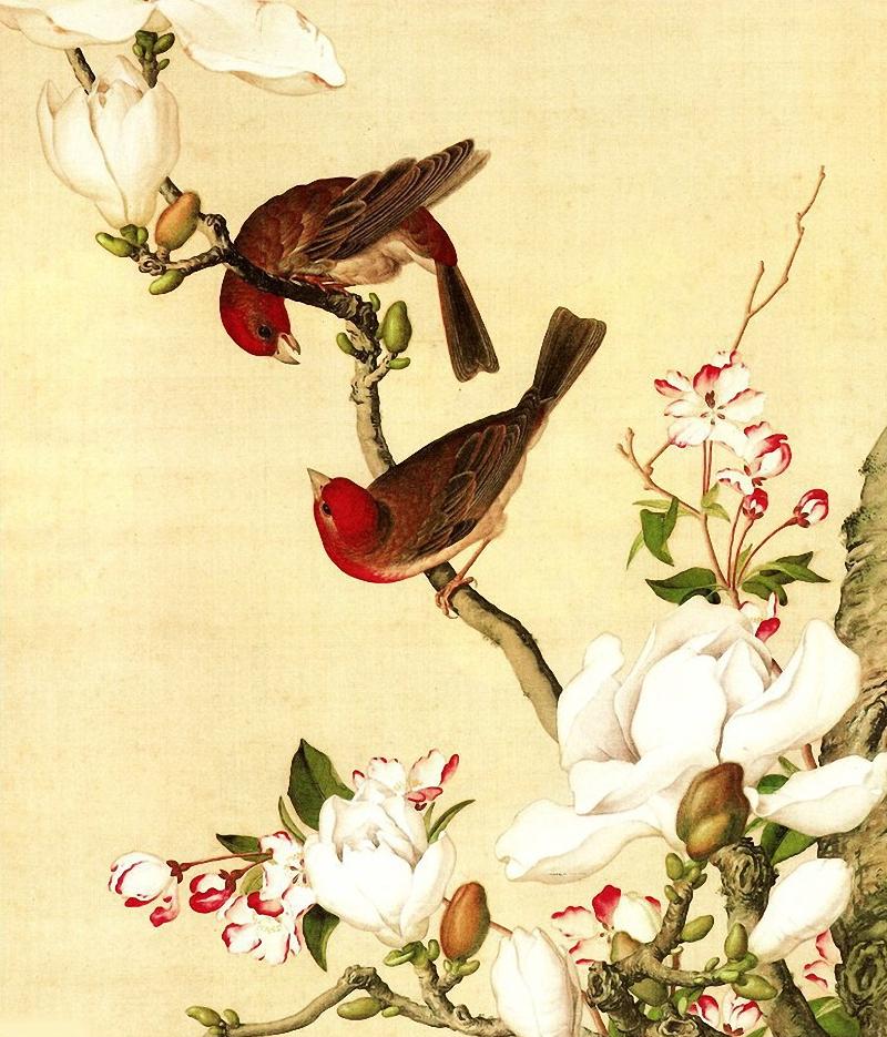 Открытки птицы и цветы, мирным небом