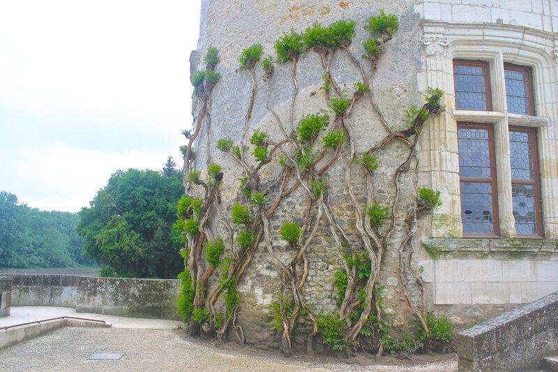 Замки Луары.Шенонсо.