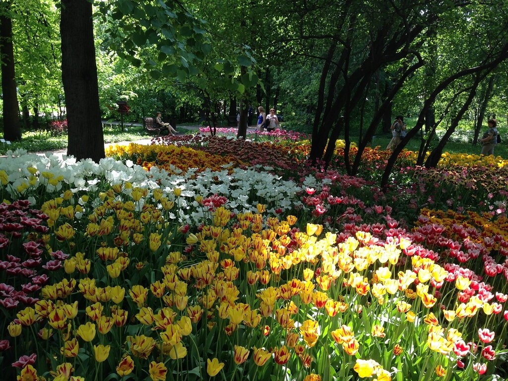 Тюльпаны 2013