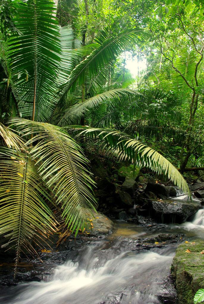 Forêt tropicale humide dans la région de Para au Brésil