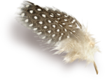 MRD_EggStraSE_feather-sh1.png