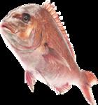 рыба (2).png