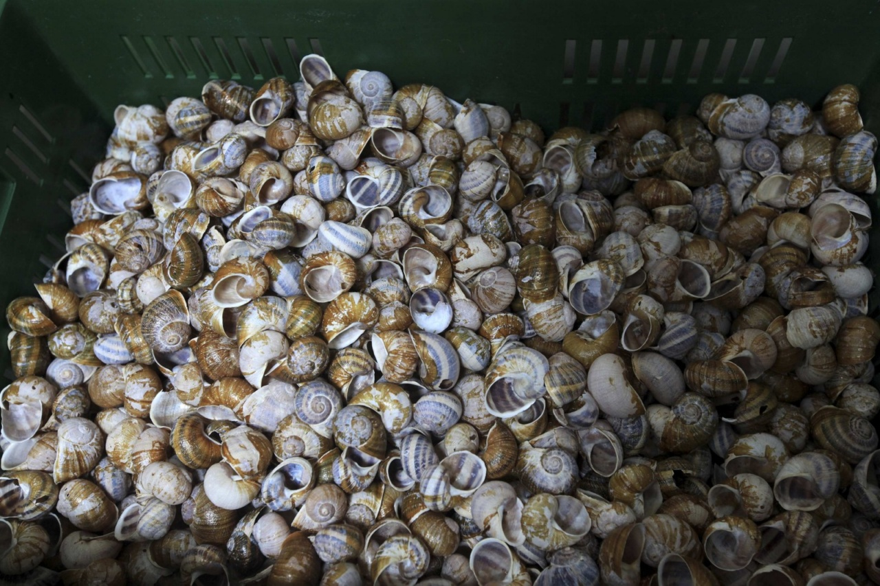 Snail shells of the Helix Aspersa variety wait to be washed in a farm near Choachi