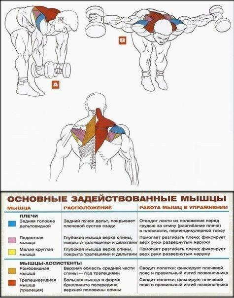 Упражнения на плечи руки в домашних условиях