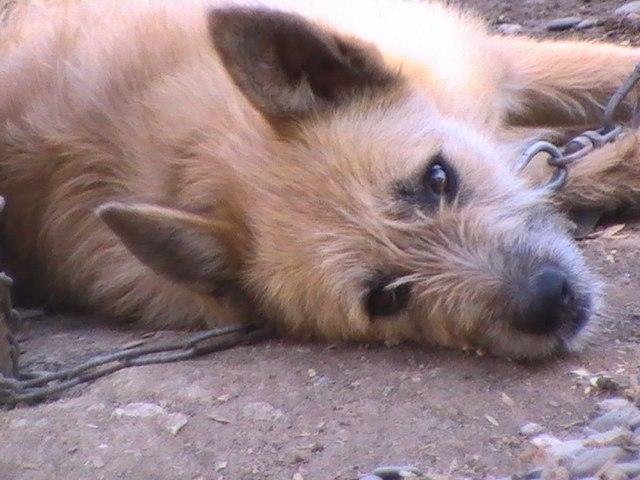 собака из приюта для бездомных животных