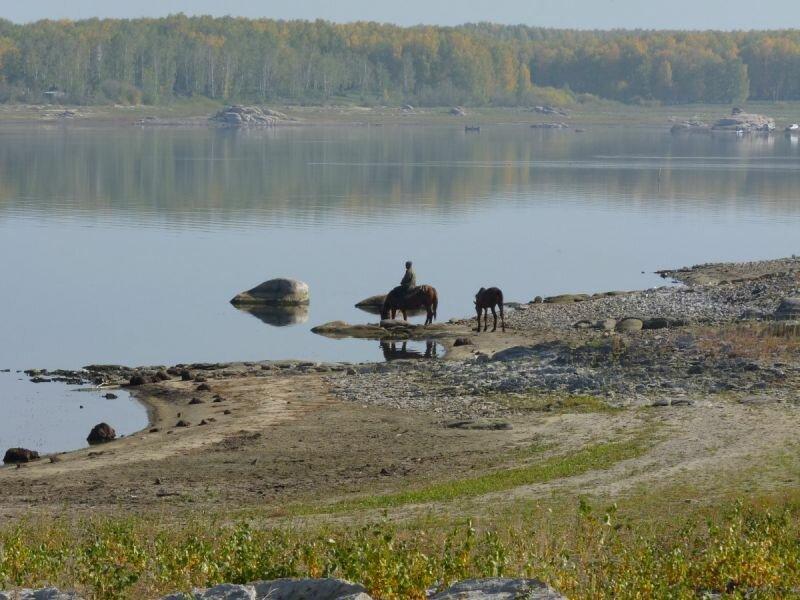 Водопой на Аргазинском водохранилище (30.05.2013)