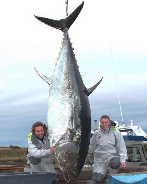 Удачной рыбалки!