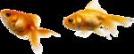 рыба (6).png