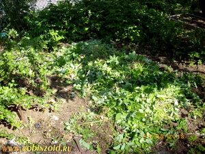 Огород на ремонте