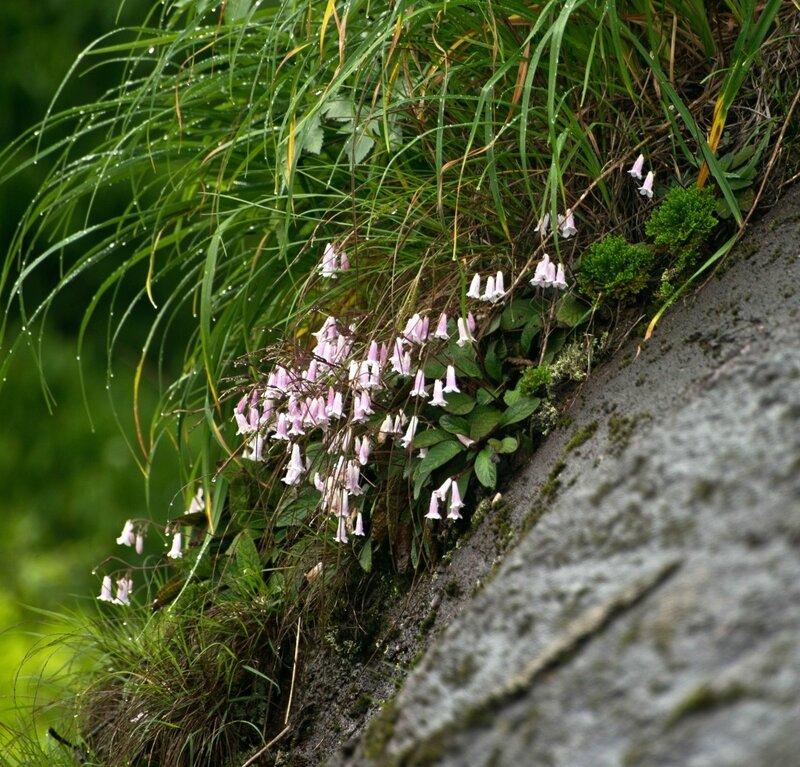 Цветы и капли