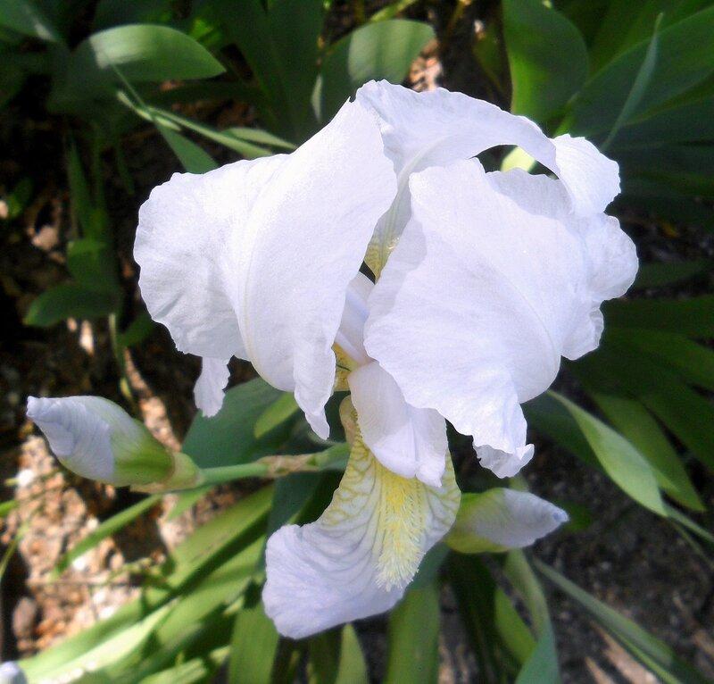 В начале мая, цветение