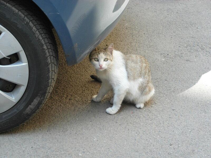 Кошак с Владимирского проспекта