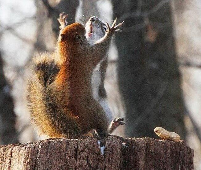 Эпическая битва за арахис