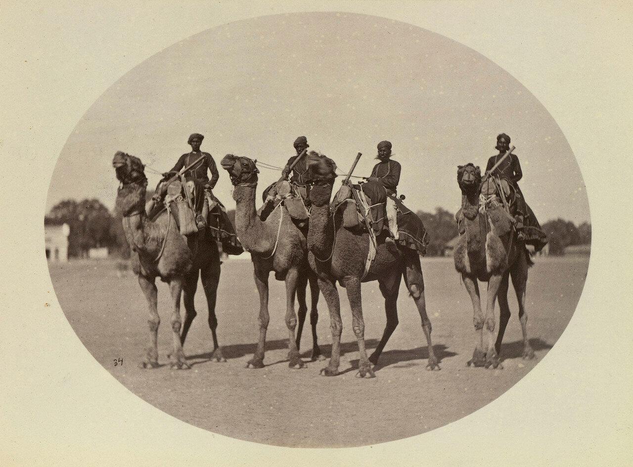 74. Замбураки (верблюжие кавалеристы) махараджи Алвара