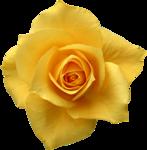 Holliewood_RoseIsARose_Rose19.png
