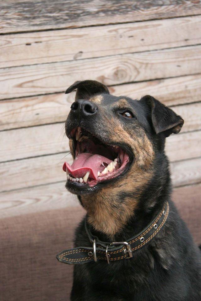 Малыш - трехлапик собака из приюта догпорт