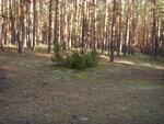 Шатурский лес в сентябре