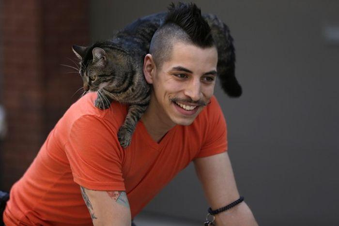 Кот на плече фото 10