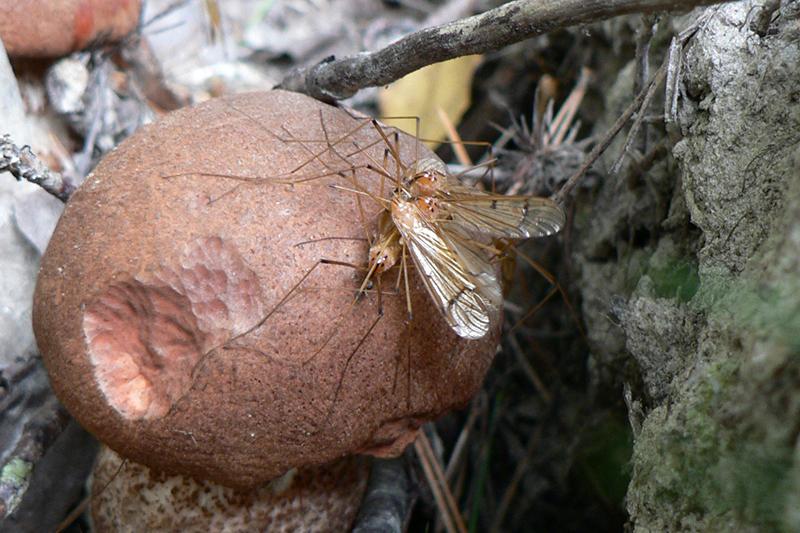 северная опушка комарики