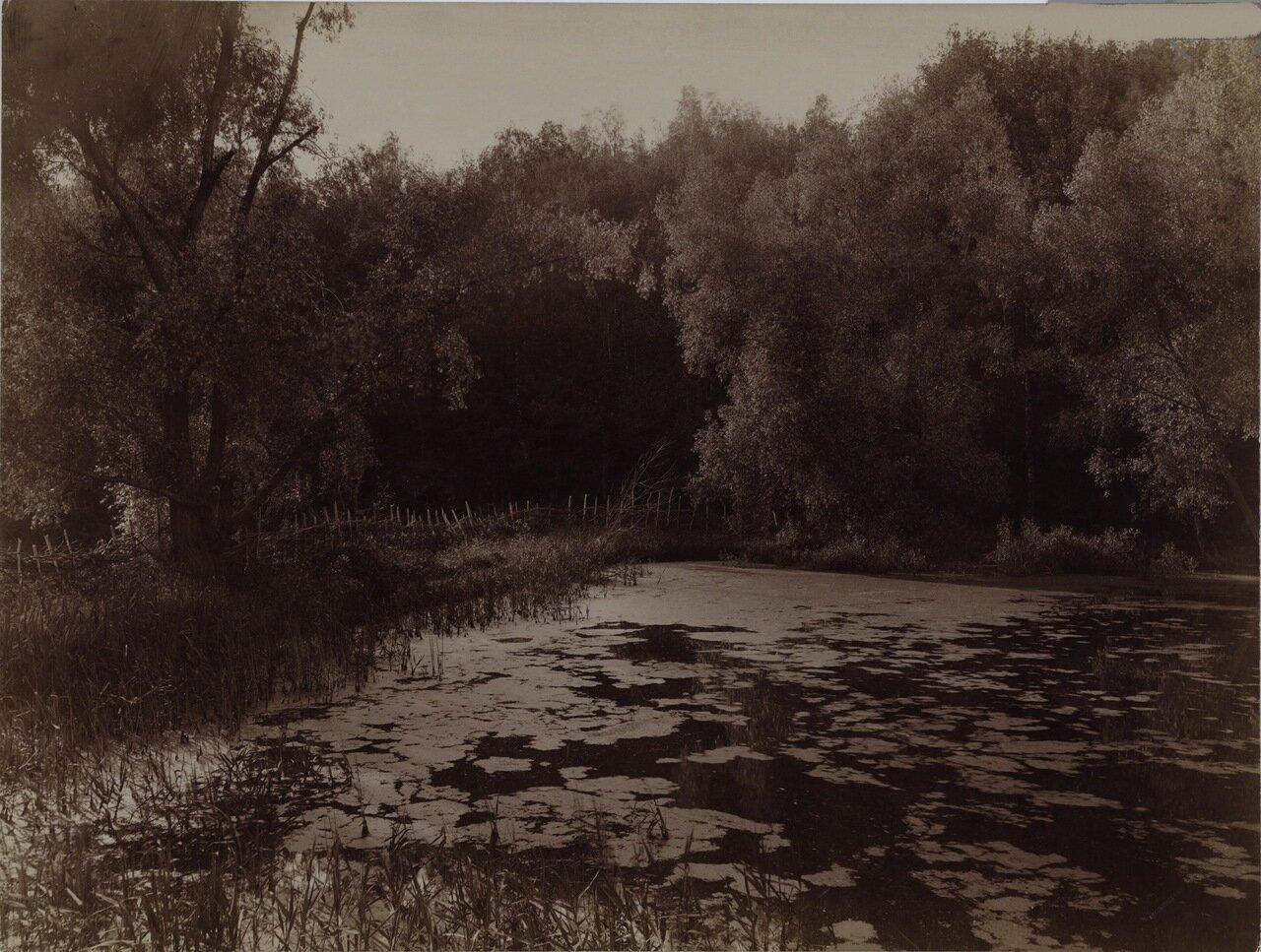 Заросший пруд.1892.
