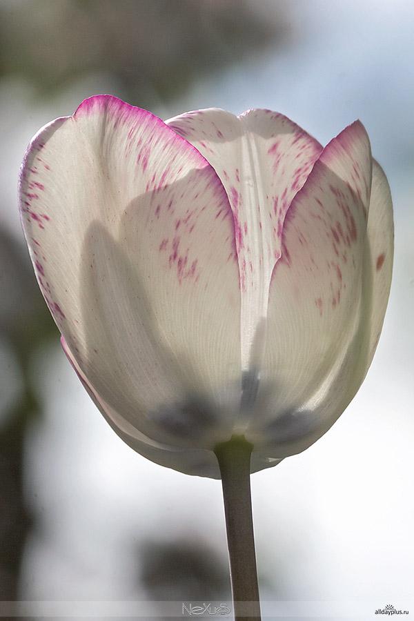 С Днём Рождения, Влад (VladBor) !!!  Я люблю все цветы, часть 40.