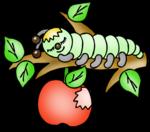 иллюстр  - гусеница  и   яблоко .png