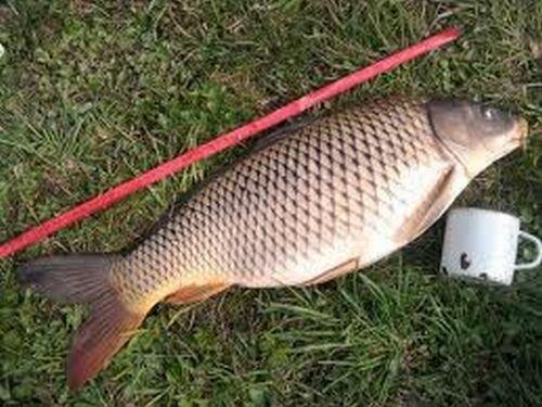 русские видео как ловят рыбу в озерах