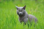 На дворе трава, на траве котэ...))