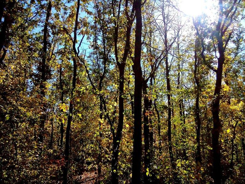 Осень-деревья-2015.jpg