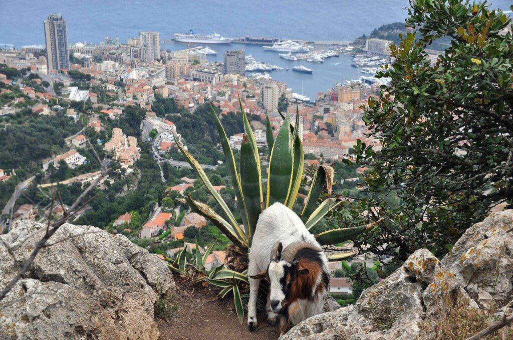 Козёл над Монте-Карло