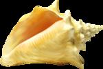 Раковина