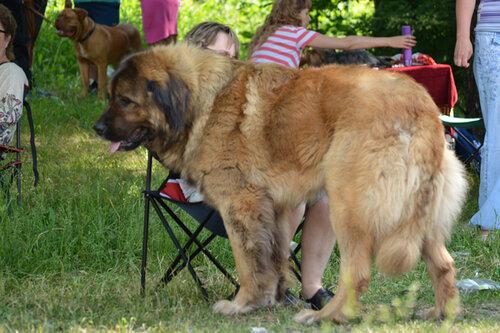 выставка собак 11