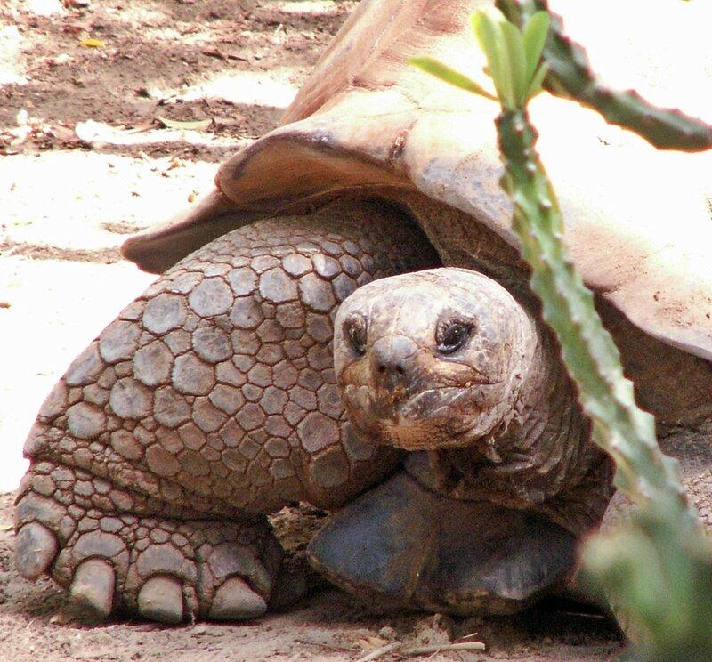 Секс фото черепаха порна