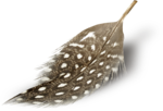 MRD_EggStraSE_feather-sh2.png