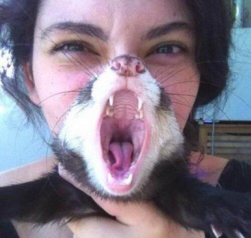 Борода из кота