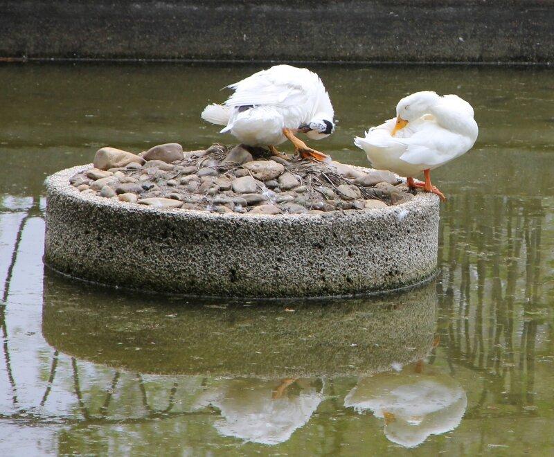 Мадрид. Парк Буэн Ретиро. Парк Буэн Ретиро. Рыбный домик (La Casita del Pescador)