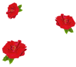 Roses For Us