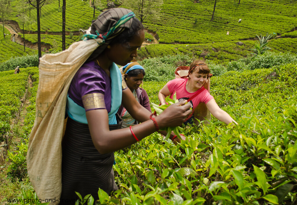Сколько брать денег на отдых в Шри-Ланке? Зависит от того, сколько чая вы собираетесь привезти с собой в Россию.