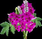 MRD_EggStraSE_flower-cluster.png