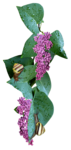 flowers (98).png