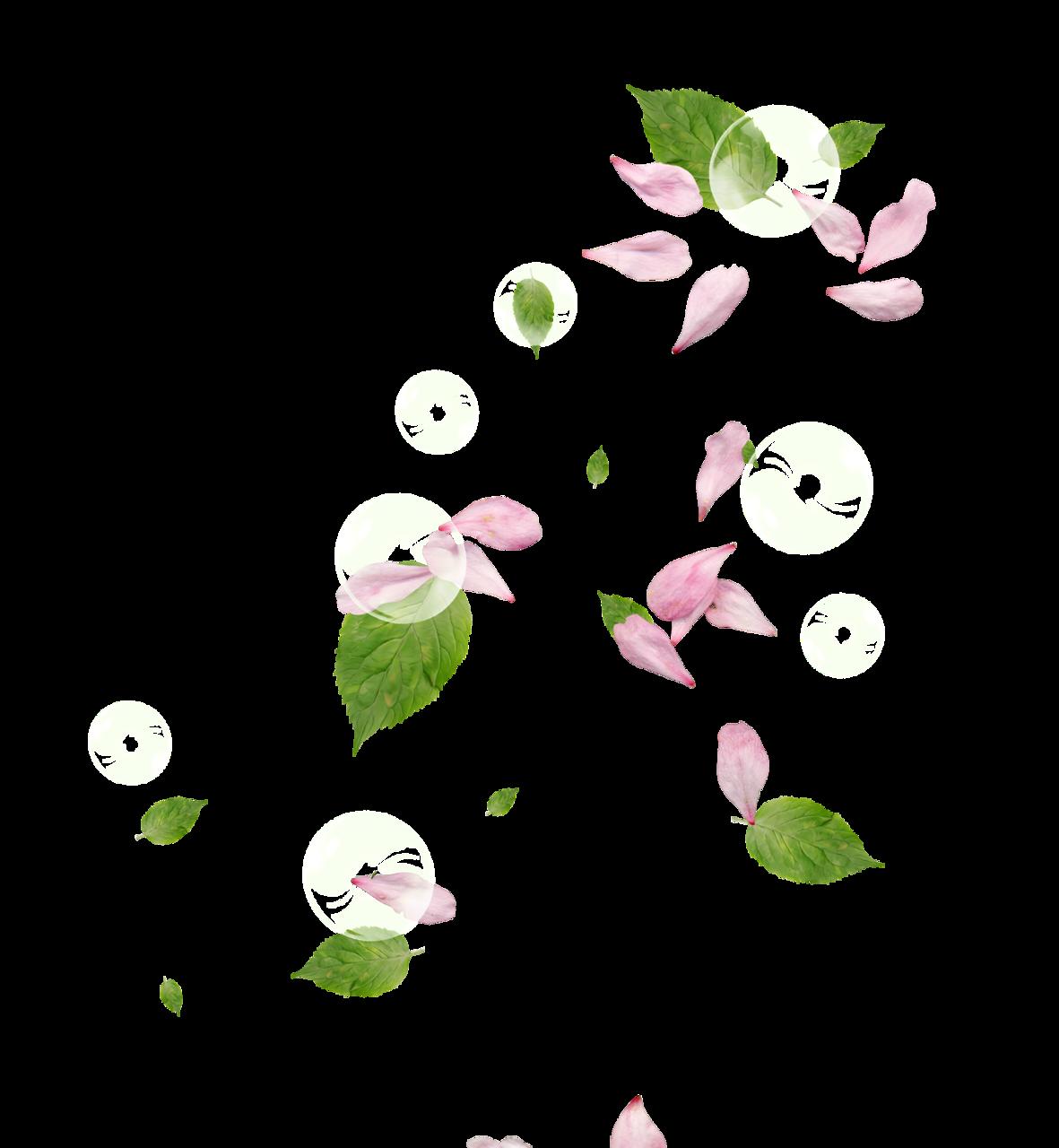Цветы лепестки png, невесты