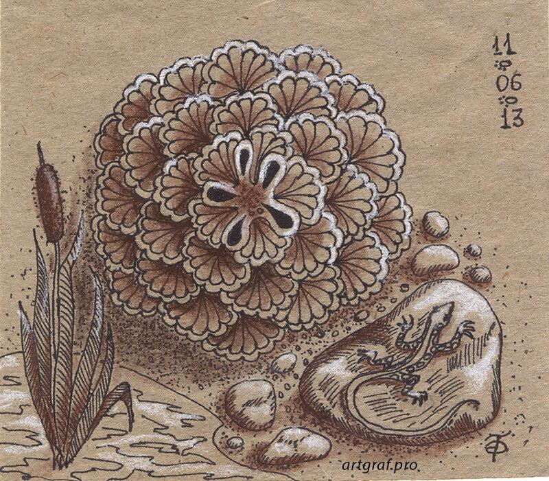 Ящерка на камне