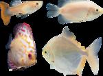 рыба (10).png