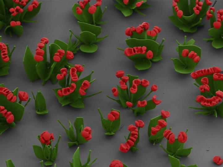 Цветочные имитации на микроуровне от Wim L. Noorduin
