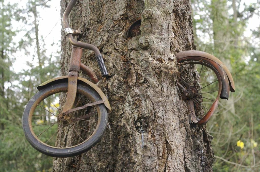 Картинки по запросу велосипедом, вросшим в дерево