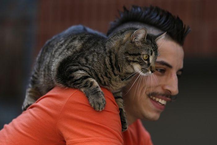 Кот на плече фото 4