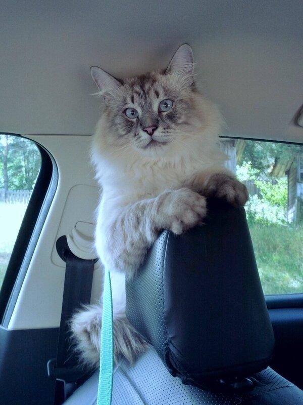 Куда едем ?
