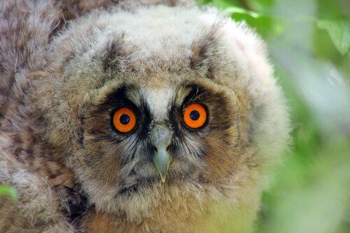 Эти глаза напротив...!)))))